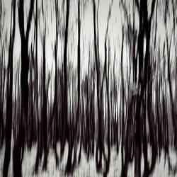 Schizophrenia by EmirKurtaran