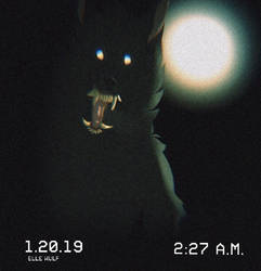 Trailcam by canine-jaws