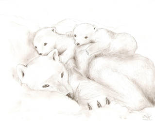 Polar bear by Sassille