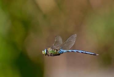 Is it a bird? Is it a plane? by Kriloner