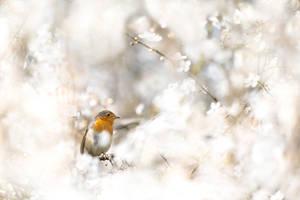 Spring! by Kriloner