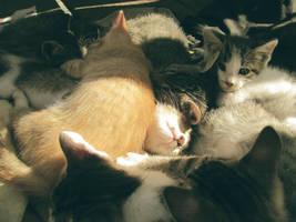 Kitten Nest by TonarysGirl