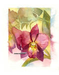 Orchid by blix-it