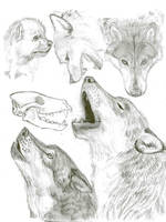 wolf sketches by vagrantvulpes