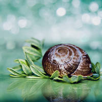 Snail by fruitpunch1