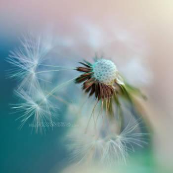 Dandelion by fruitpunch1