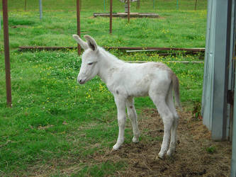 baby donkey by londondesgins