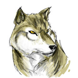 wolf sketch by EmaCamU