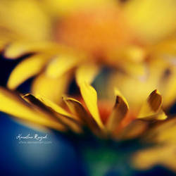 Yellow area by xTive