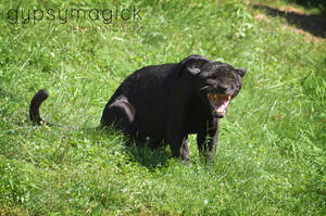 Black Jaguar 2 by liorelysia