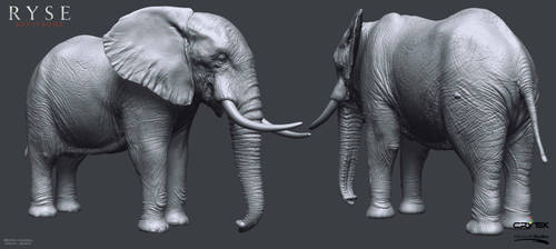 Elephant Highpoly by Bruno-Camara