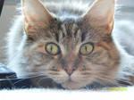 Very scary kitty! by ShadowFox-Cosplay