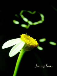 ..he loves me not, he LOVES ME by LimpidD