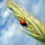 Ladybird by LimpidD