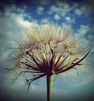 Dandelion by LimpidD