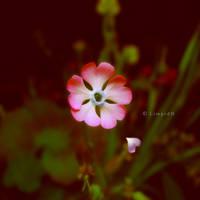 Fallen Heart by LimpidD
