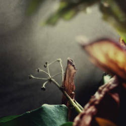 essai 2 Fleurs by edredon