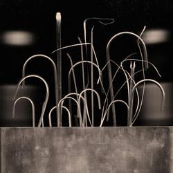 Bouquet de nerfs by edredon