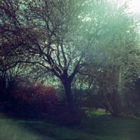 rever: prunus by edredon