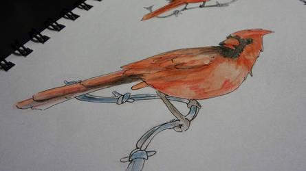 Cardinal by Sh3ikha
