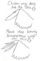 On Maniraptor Wings by Albertonykus
