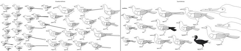 Birdbodies of the Mesozoic by Albertonykus