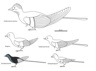 Confuciusornithiformes by Albertonykus