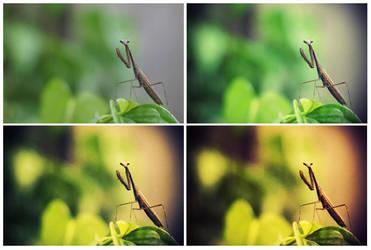 War Mantis! by Nuzoom