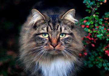 Cats Eye by Smillerr