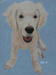 Golden Puppy by ZireaelArt