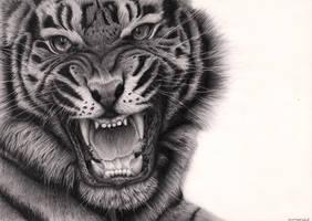 Tiger Roar by Bengtern