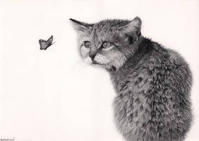 cat with butterfly by Bengtern