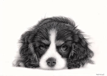 Cavalier by Bengtern