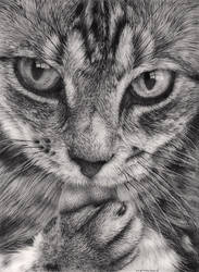 Cat 3 by Bengtern