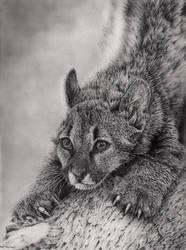 Puma Cub by Bengtern