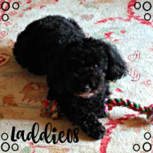 laddie08's Profile Picture