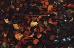 golden leaves by AeterneNovusNatus
