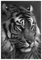 I, Tiger by Delitescentrix