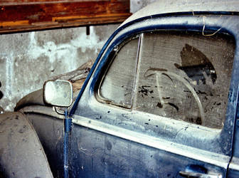 go, beetle, go by spicua