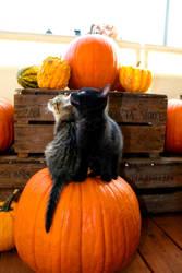 halloween - stock. by ramona-stock