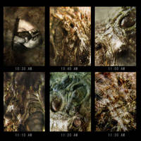 THE ONE HOUR CYCLE OF LIFE by Sallow