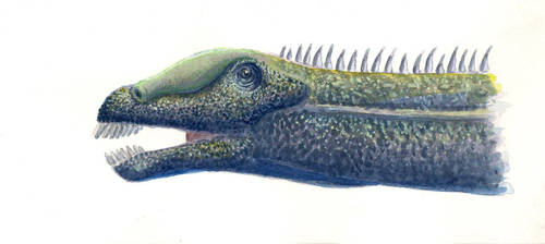 Diplodocus carnegii portrait by Sphenacodon