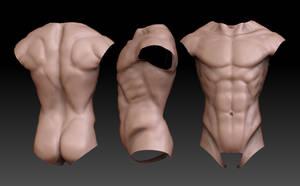 Anatomy - Torso Study by GastonBR