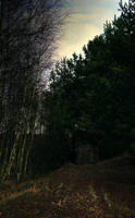 Dark Forest 2 by mateuszskibicki1