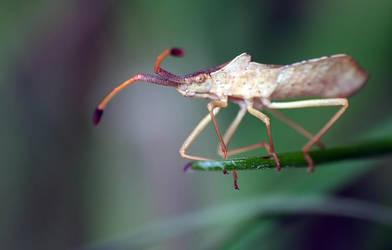 Bug by mateuszskibicki1