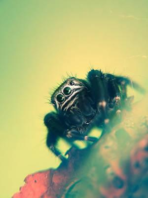 Spider - Pajak 20 by mateuszskibicki1