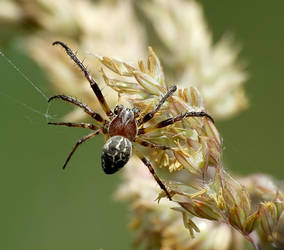 Spider - Pajak 23 by mateuszskibicki1