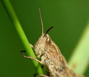 Grasshopper 3 by mateuszskibicki1