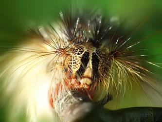 Caterpillar portrait by mateuszskibicki1