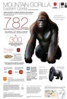 782 mountain gorillas by memuco